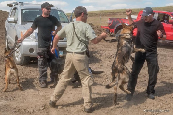 Dakota-Access-Pipeline-private-security-guards-getting-dogs-excited-to-attack-Indigenous-Water-Protectos.-FB-page-of-Teko-e1472996394864
